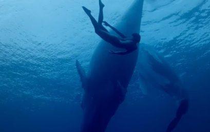 Monthly Film: International Ocean Film Tour, Vol. 6
