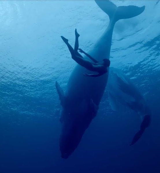 Monthly Film: International Ocean Film Tour, Vol. 6