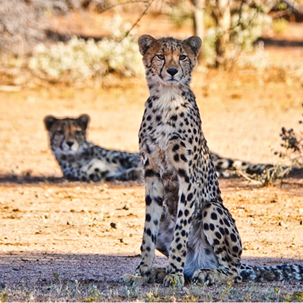 """""""Well Spotted"""" Photo Presentation"""